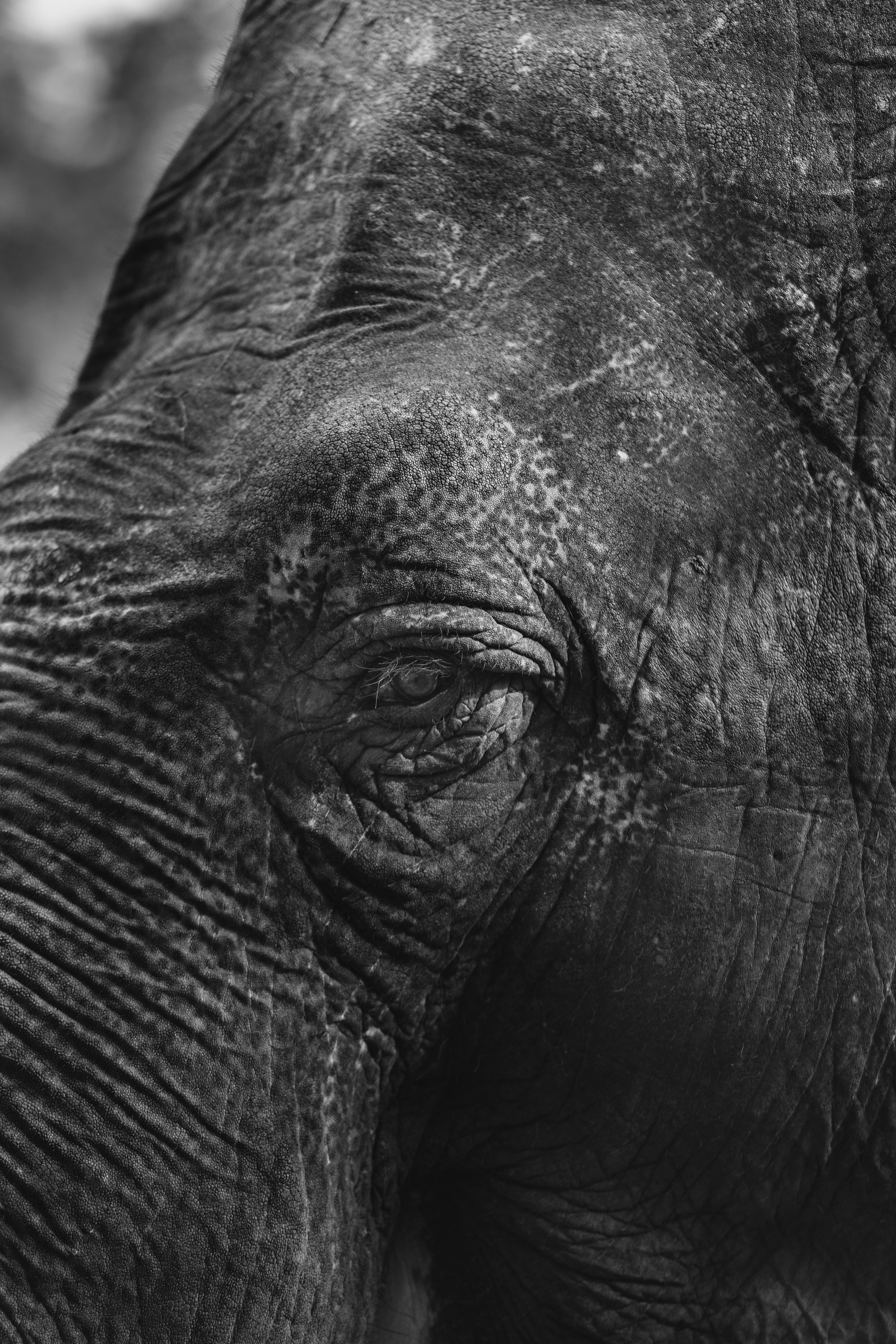 Elephant - Tierpark Hagenbeck Hamburg -Willife - Alberto Piroddi Photography
